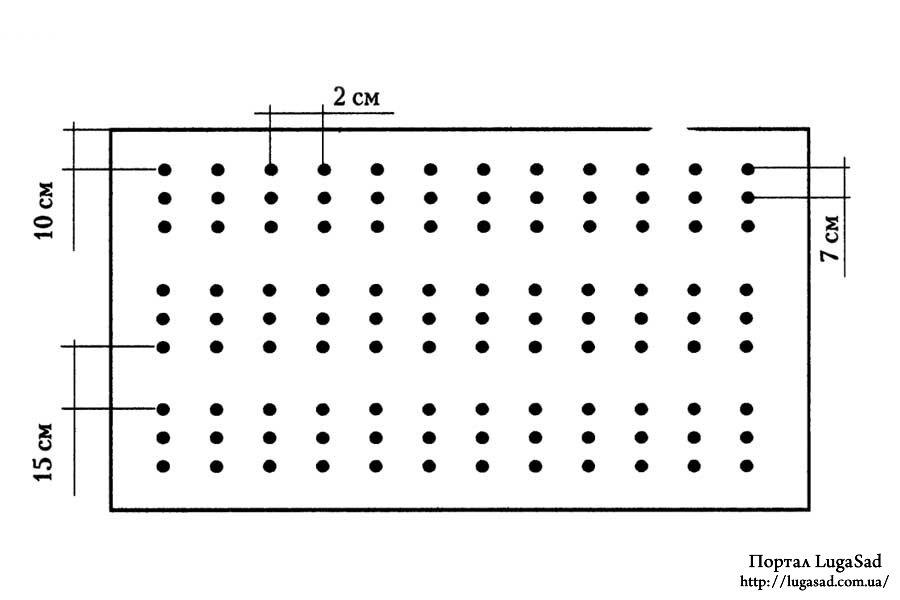 Схема посева семян